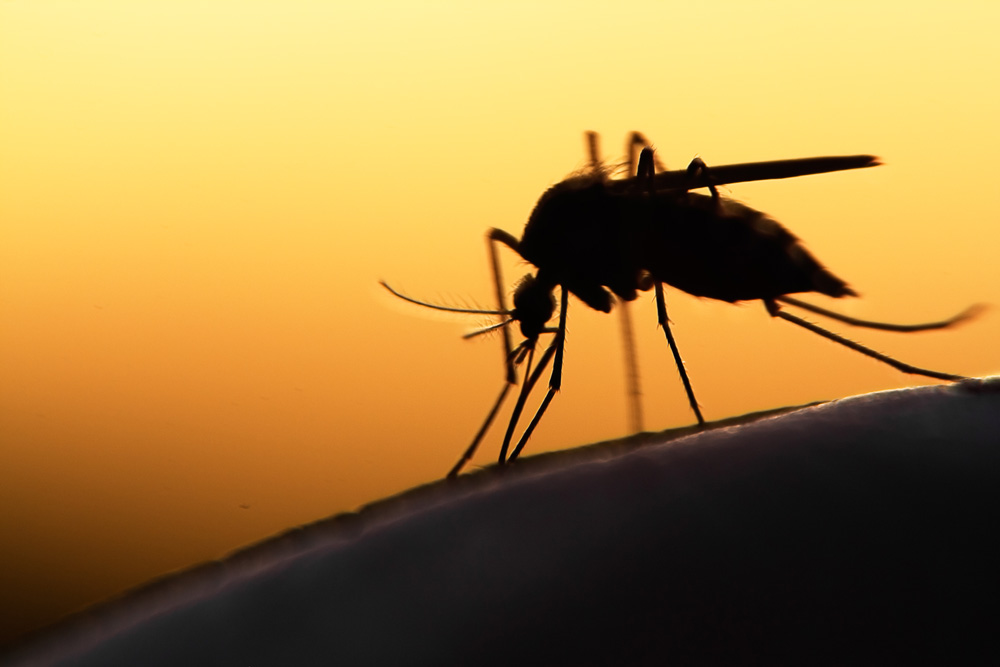 mosquito treatment options in Broward and Palm Beach county
