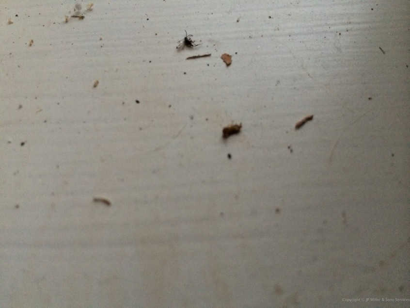 Termite Treatment, Termite Inspections Deerfield Beach, Boca Raton, Pompano Beach