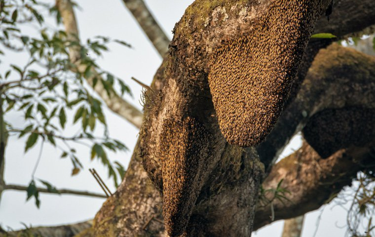 Bee Control in Broward and Palm Beach